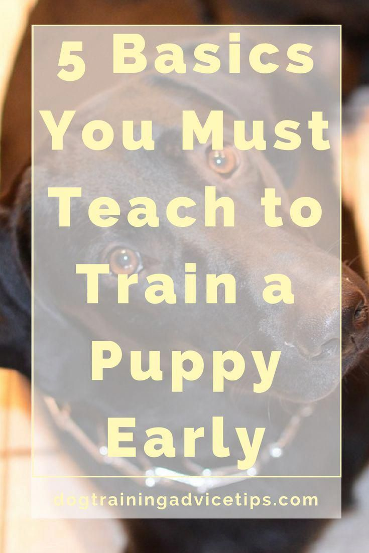 Pure Standardized Dog Training Tips Official Statement Advice