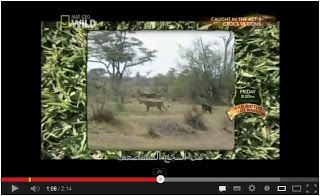 Whoa! Monkey attacking Lion!! Watch here:  http://gdurl.tk/Jd
