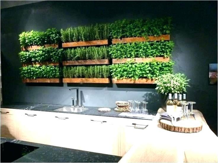 indoor kitchen garden google search herb garden in kitchen kitchen herbs herbs indoors on kitchen garden id=86628