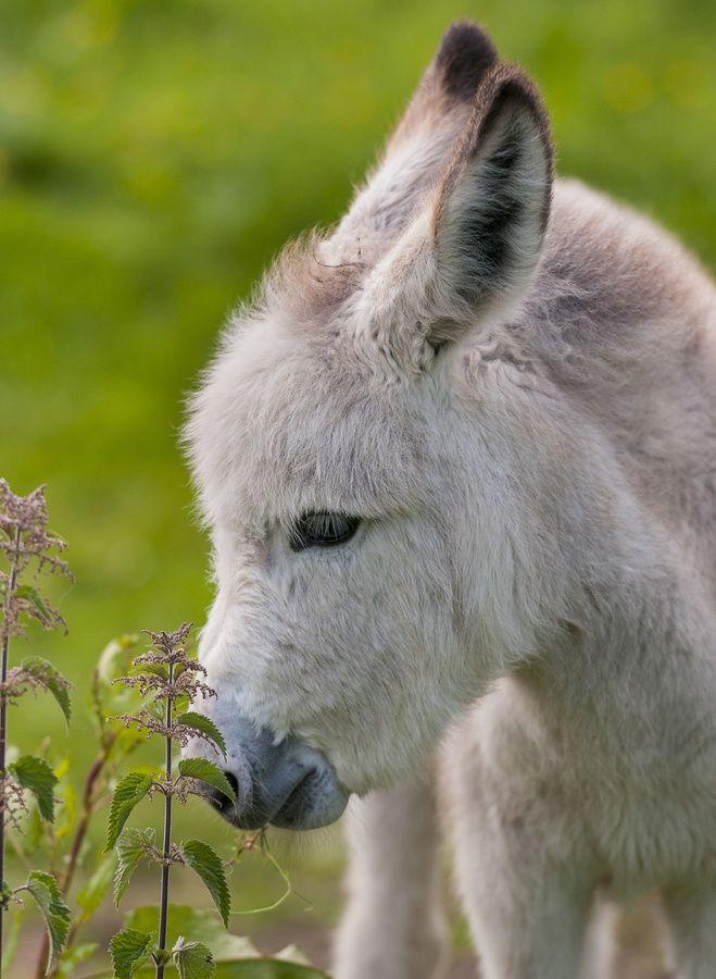 Little Donkey <3