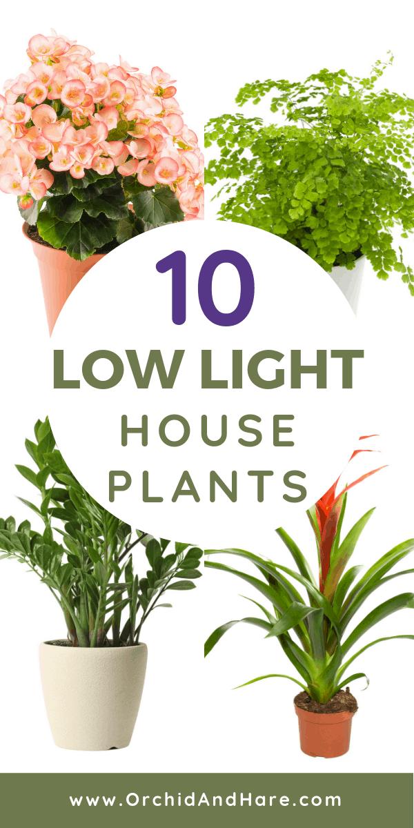 10 Low Light House Plants In 2020 Low Light House Plants Best