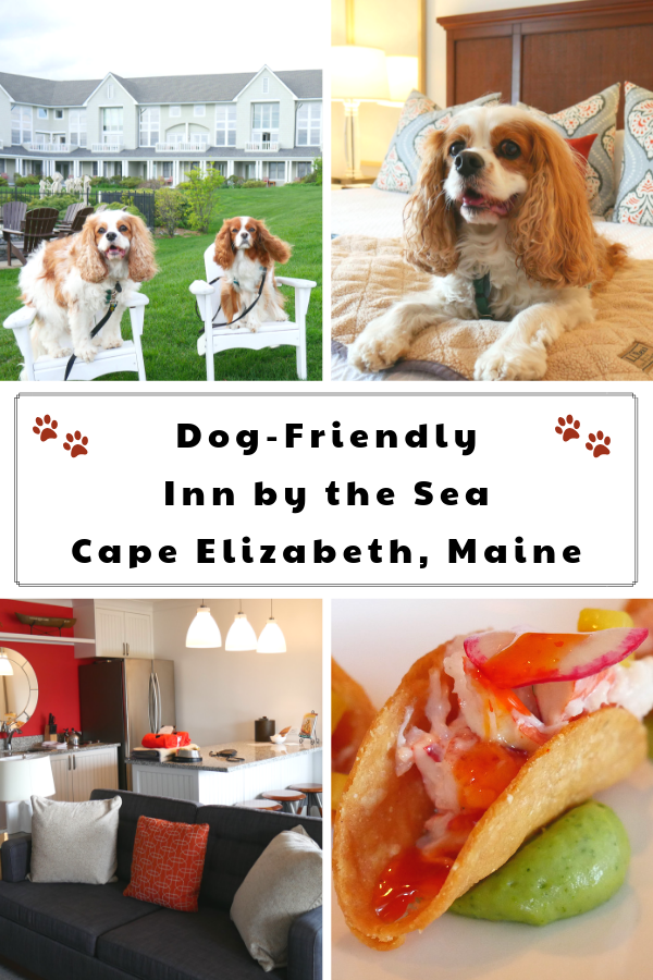 Dog Friendly Spa Hotel The Inn By The Sea In Maine Pet Friendly Vacations Dog Friends Dog Friendly Hotels