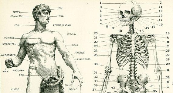 Anatomie Corps Humain Homme 1897 corps humain anatomie planche originale larousse decor vintage
