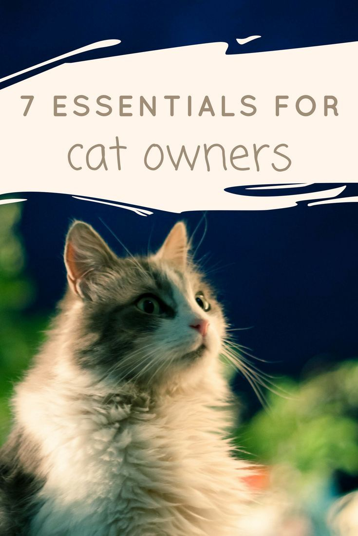 7 Essentials For Every Cat Owner Casey La Vie Cat Owners Cats