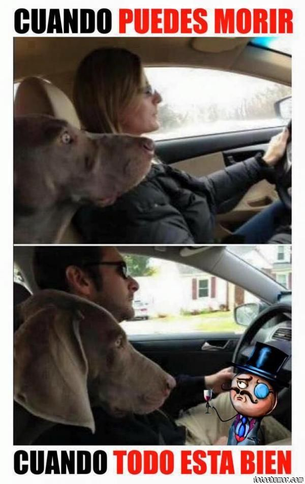 Manejando Fotos De Perros Perro Manejando Perros