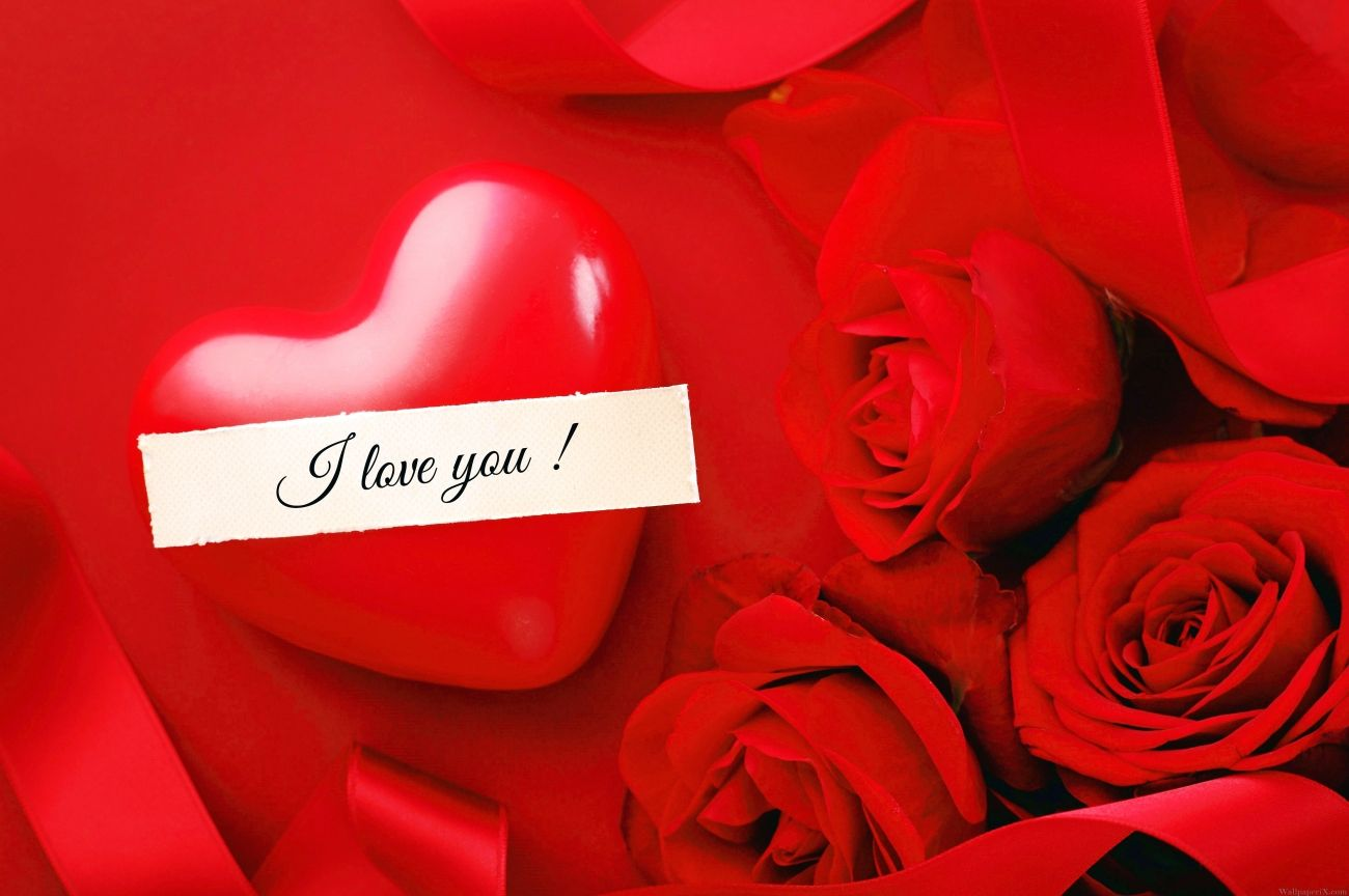Download Valentines Day Rose With Love Love Flowers Roses 5616x3744 High Quality Hd Wallpaper In 2k 4k 5k 8k 10k Resol Love Flowers Download Valentines Flowers