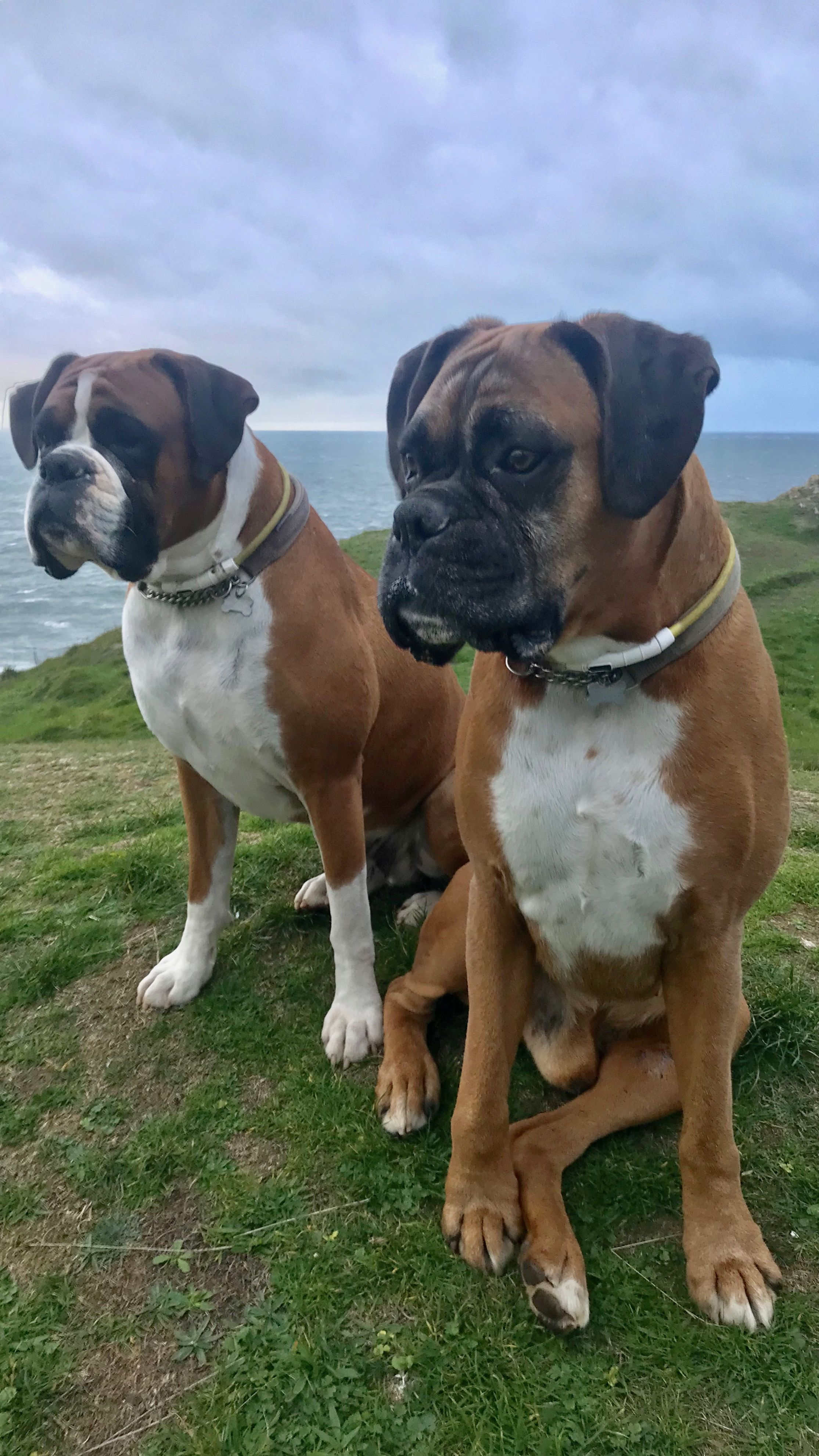 Ike And Henry Sat Atop Three Cliffs Watching Everything Around