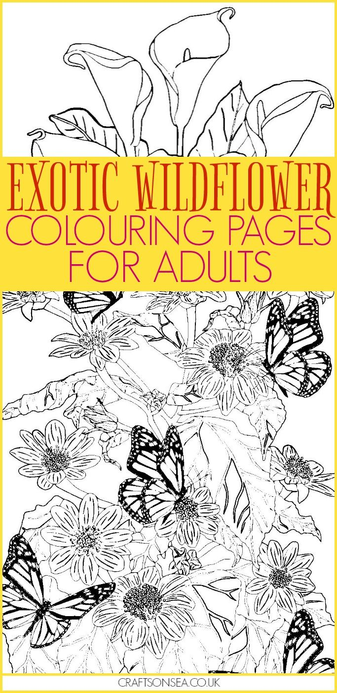 Three Free Wildflower Colouring Pages For Adults To Download And Colour Today Beautiful Designs With