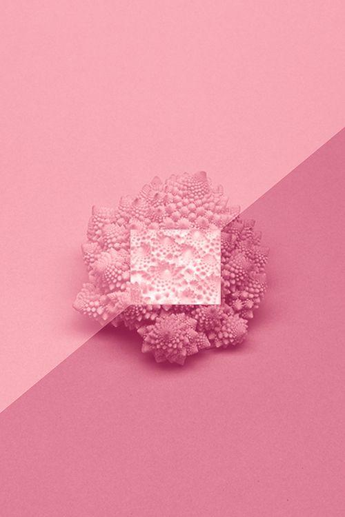 An Entry From Thethisthere Powered By Tumblr Com Pinke Rosen Altrosa Erdbeereis