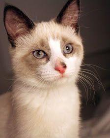 The Cat's Meow: Luna Lou