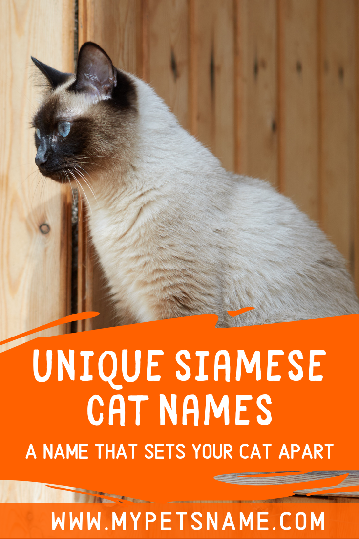 Some Unique Names Are Just Made For Siamese Cats And Have Been Used In Books And Films So We Thought It Would Be A Nice Cat Names Cute Cat Names Siamese