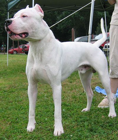 Wonderful Dogo Chubby Adorable Dog - 75b92c7b62360d2dc42d797583063892  2018_65517  .jpg