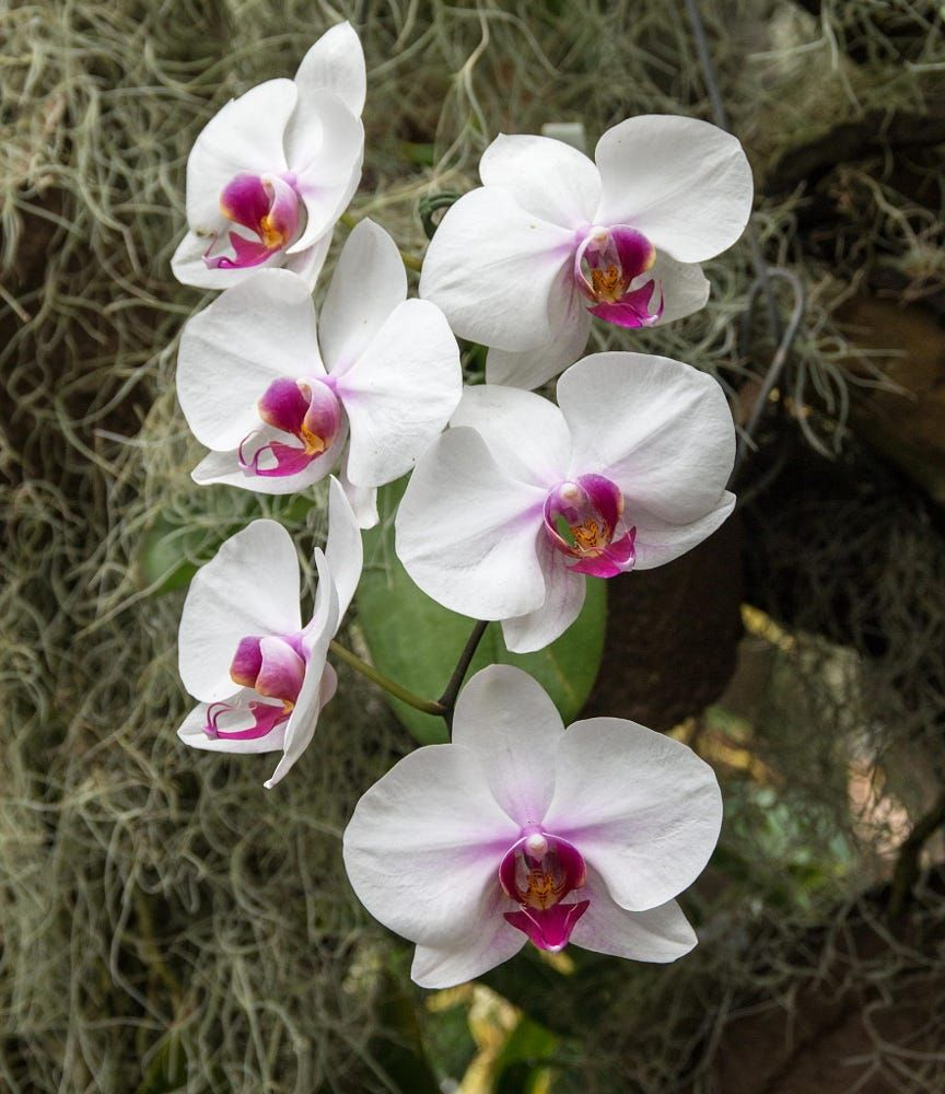 Orchid by alec kozhukhov catson on px orchid pinterest