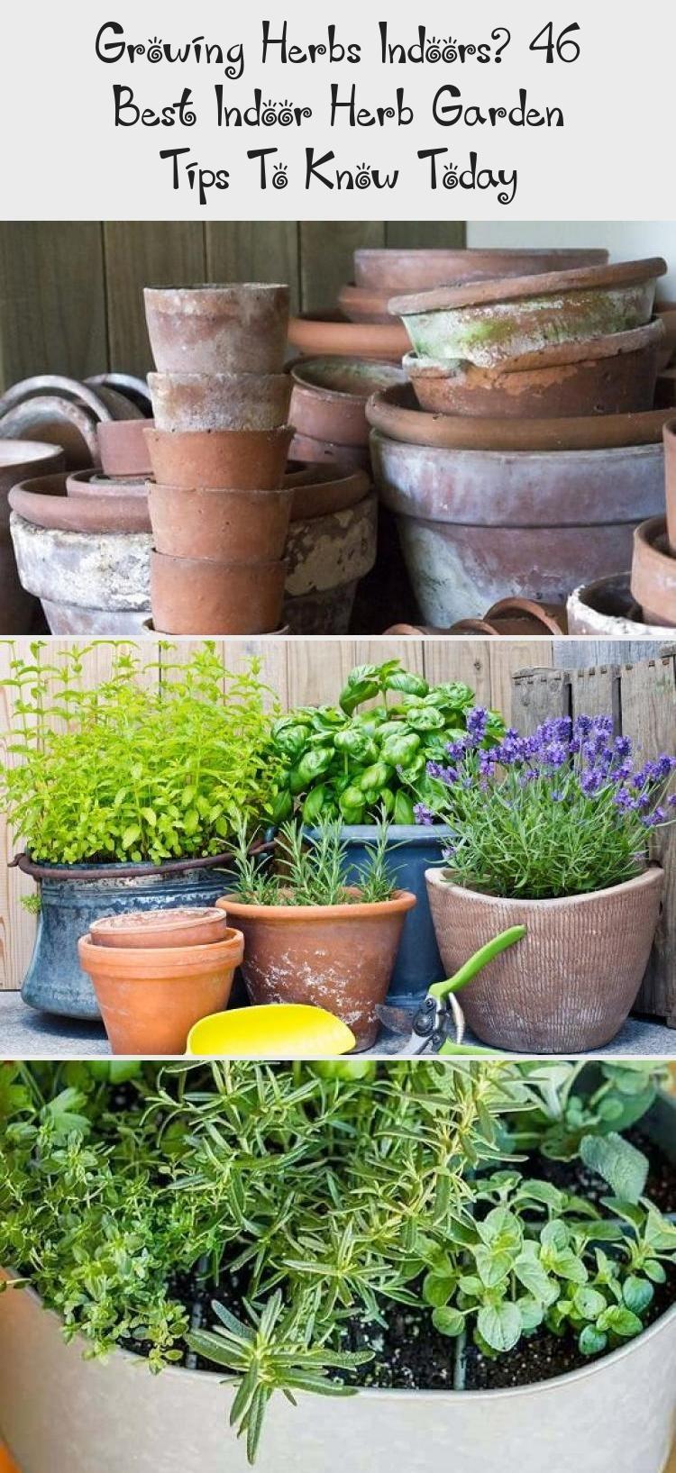 Growing Herbs Indoors? 46 Best Indoor Herb Garden Tips To
