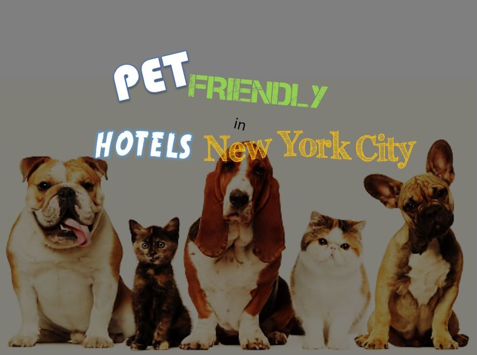 Which Are The Best Pet Friendly Hotels In New York City