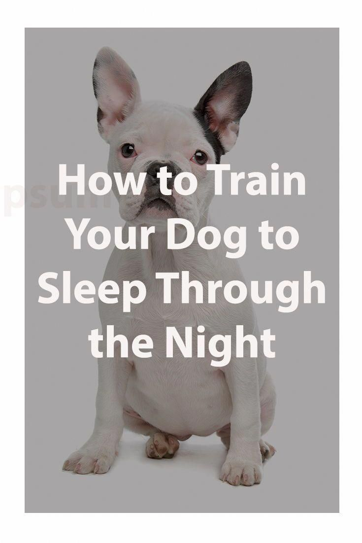 How to train your dog to sleep through the night dog