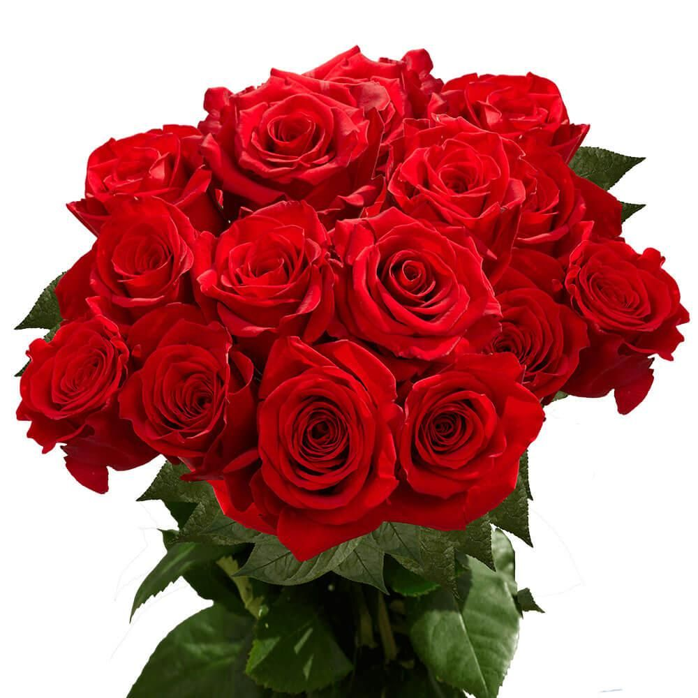 Globalrose Red Freedom Roses Fresh Flower Delivery 75 Extra Long Stems 1850500024476 The Home Depot In 2021 Fresh Flower Delivery Flower Delivery Wholesale Flowers