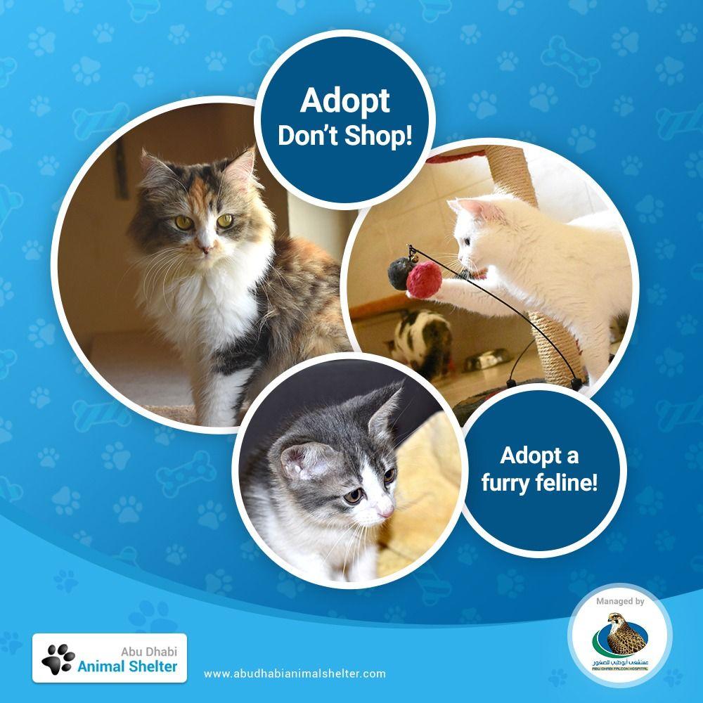 Abu Dhabi Animal Shelter Animal Shelter Animals Shelter
