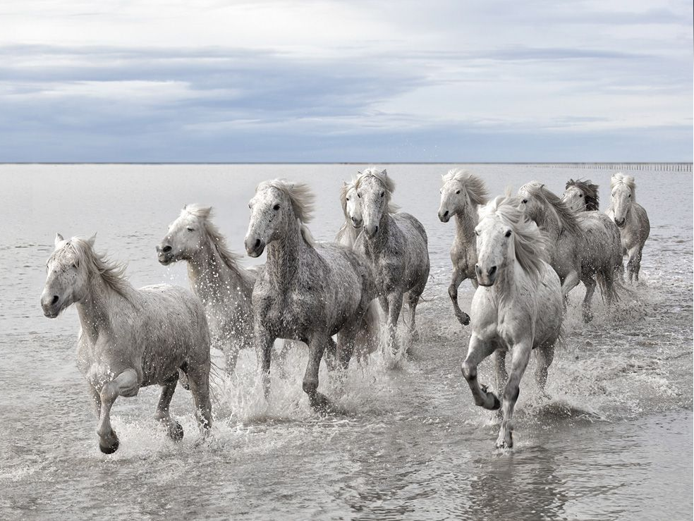 Wild Horses, France by Marco Carmassi (photography.nationalgeographic.com)