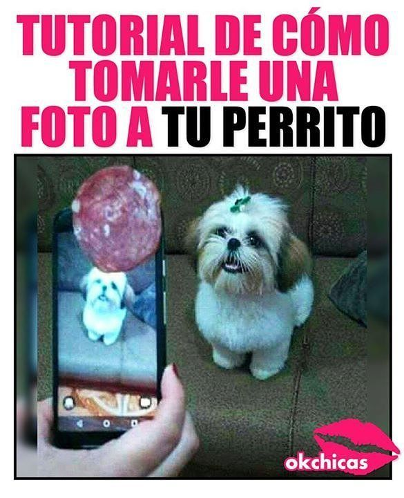 De Nada Chicas Memes Hilariousmemes Hilarious Can T Stop Laughing There Are Hot A Href Https Hembra Cl Memes Memes Divertidos Memes De Animales Divertidos