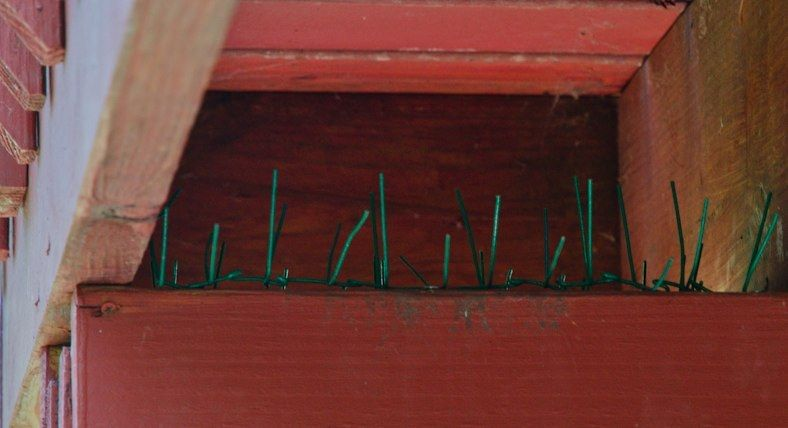 Diy Bird Spikes Bird Building Nest Keep Birds Away Diy