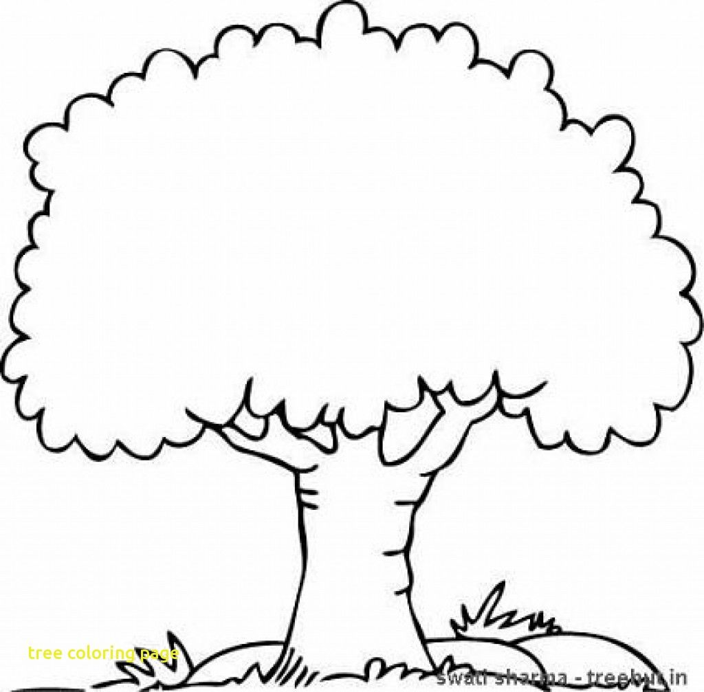 Tree Coloring Page With Color The State Pages And