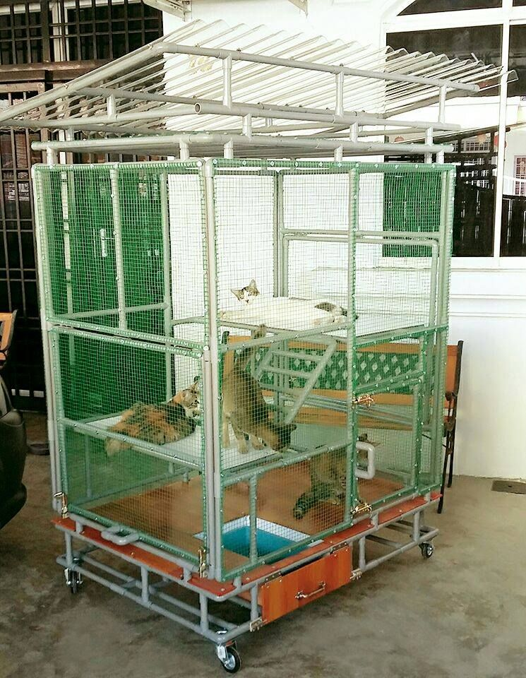 This is how we Malaysian create PVC Pipe cat cages | DIY