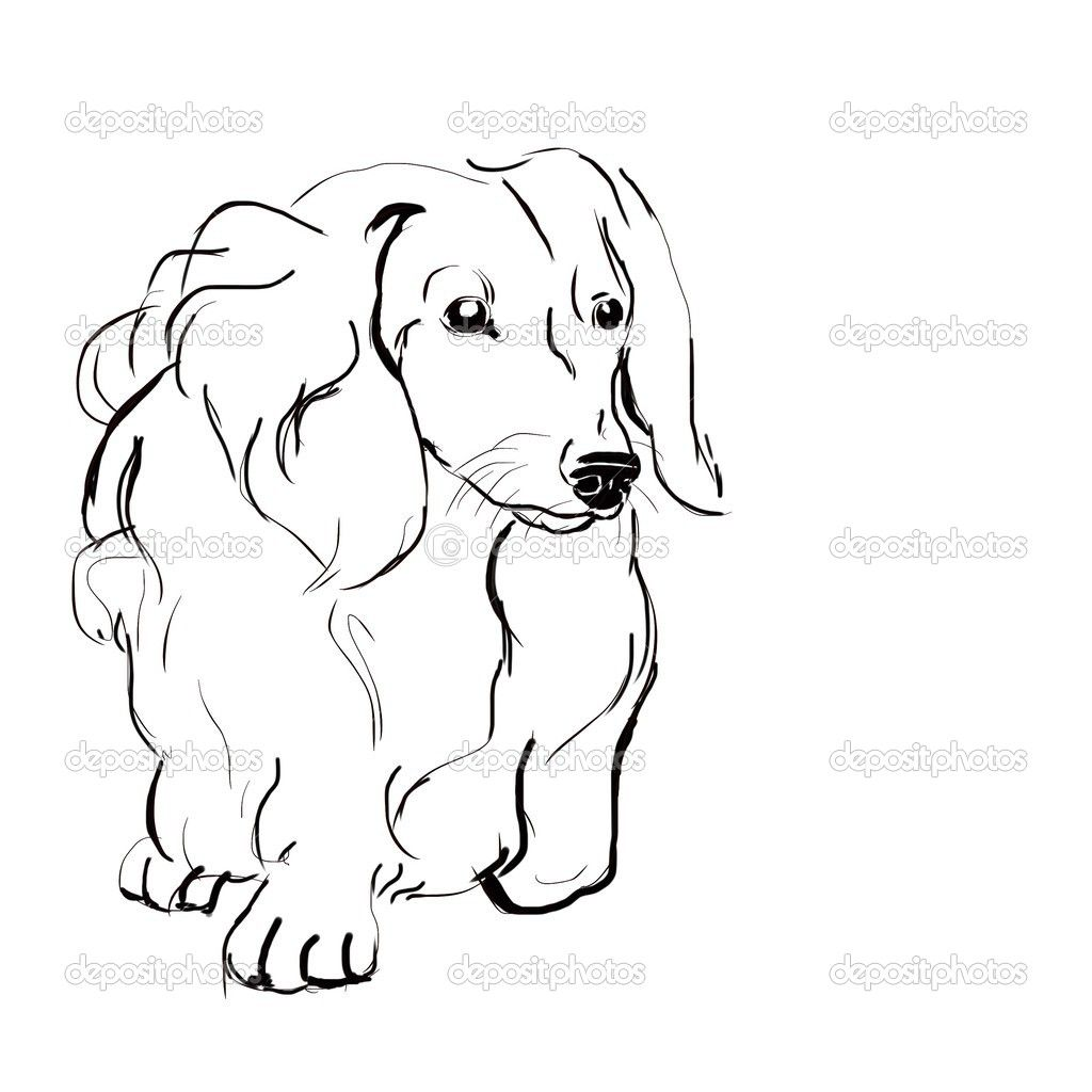 Sketch Dog Breed Long Haired Dachshund Ausmalbilder Ausmalen Zeichnen