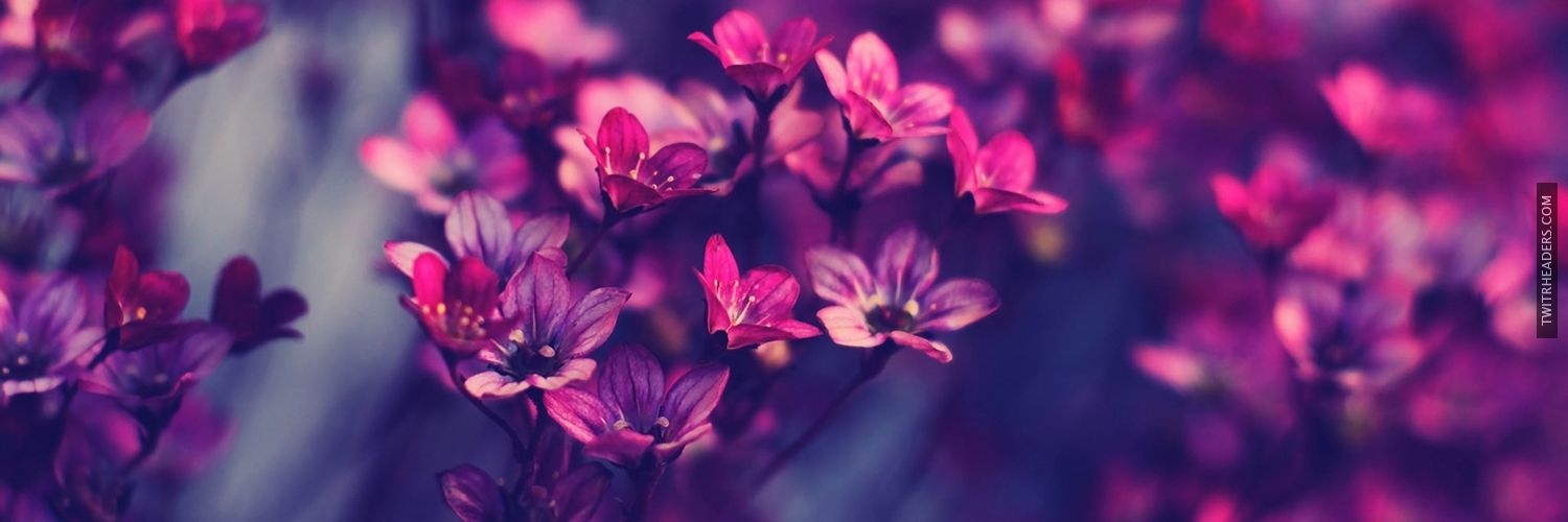 Violet Flowers Purple Flowers Wallpaper Hd Wallpapers For Laptop Hipster Wallpaper