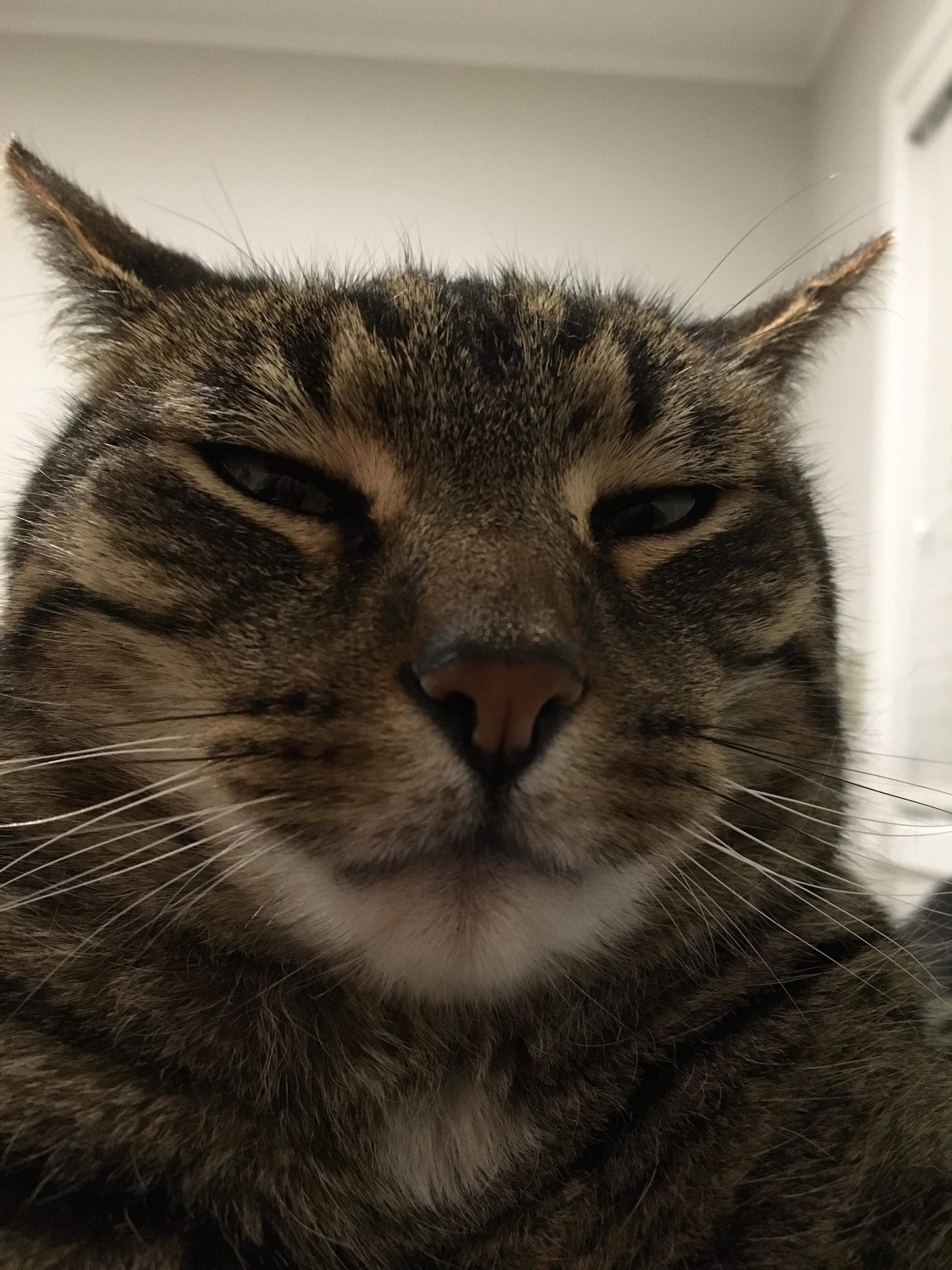 My cats old man Facebook profile pic Cat profile, Cats