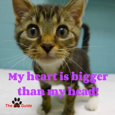 Heart is bigger than head!