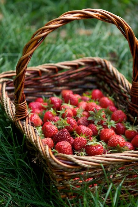 """We always had a huge strawberry patch when I was growing up.  I remember sitting in the middle of it with Gary Nichols one hot summer day eating fresh strawberries literally straight off the vine...both of us swearing that strawberries were our favorite food in the entire world!  I have to say """"those were the good old days""""!"""