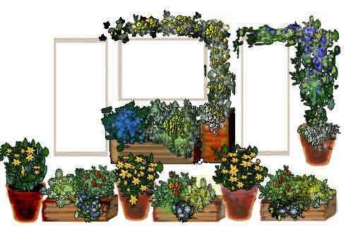 Compagnia del Giardinaggio: Coltivare le piante in vaso: la scelta ...