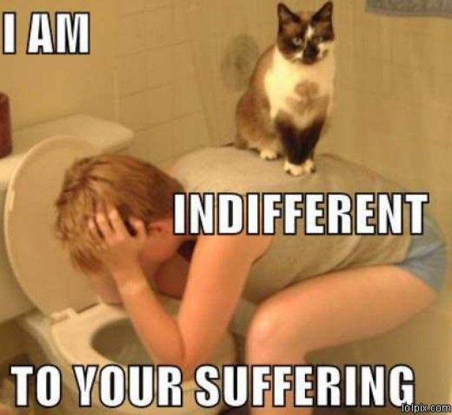 Indifferent-Cat-is-Indifferent