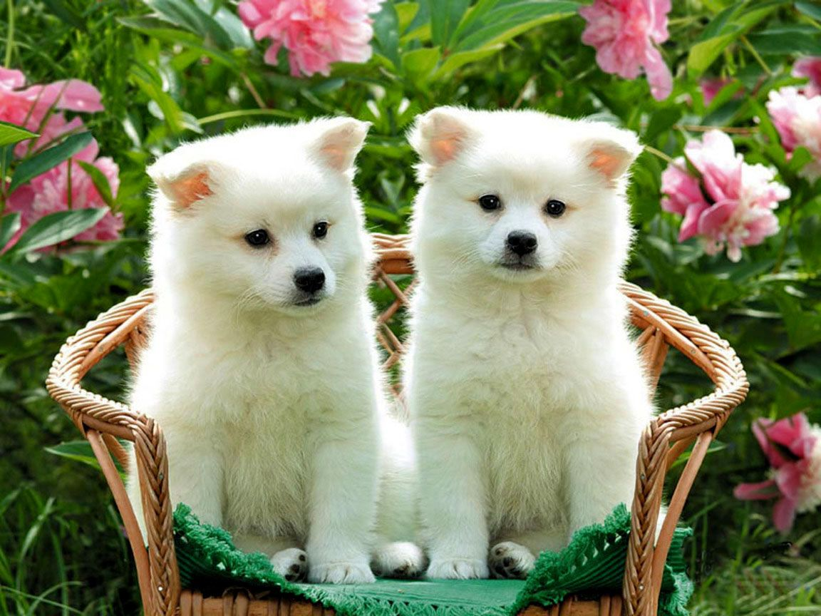 Free Online Photo Editing And Photoshop Clipping Path Services Pet Dogs Images Cute Dogs And Puppies Cute Dogs