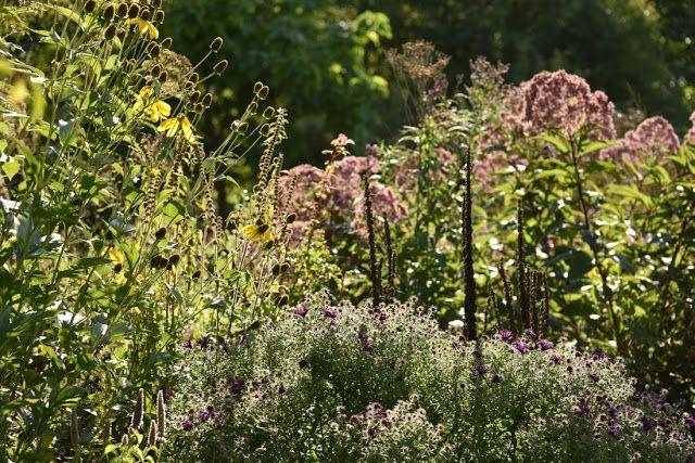 Storchschnabel Und Andere Stauden Flovers Geraniums Hardy