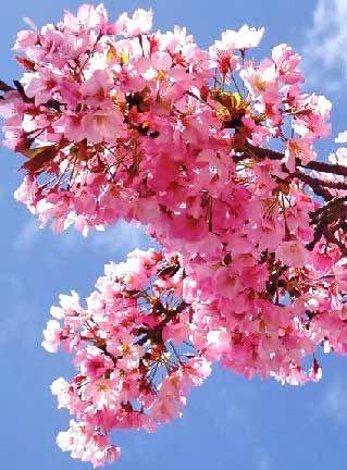 Google Image Result For Http Www Theflowerexpert Com Media Images Mostpopular Popular Flowers Blossoms Art Most Popular Flowers