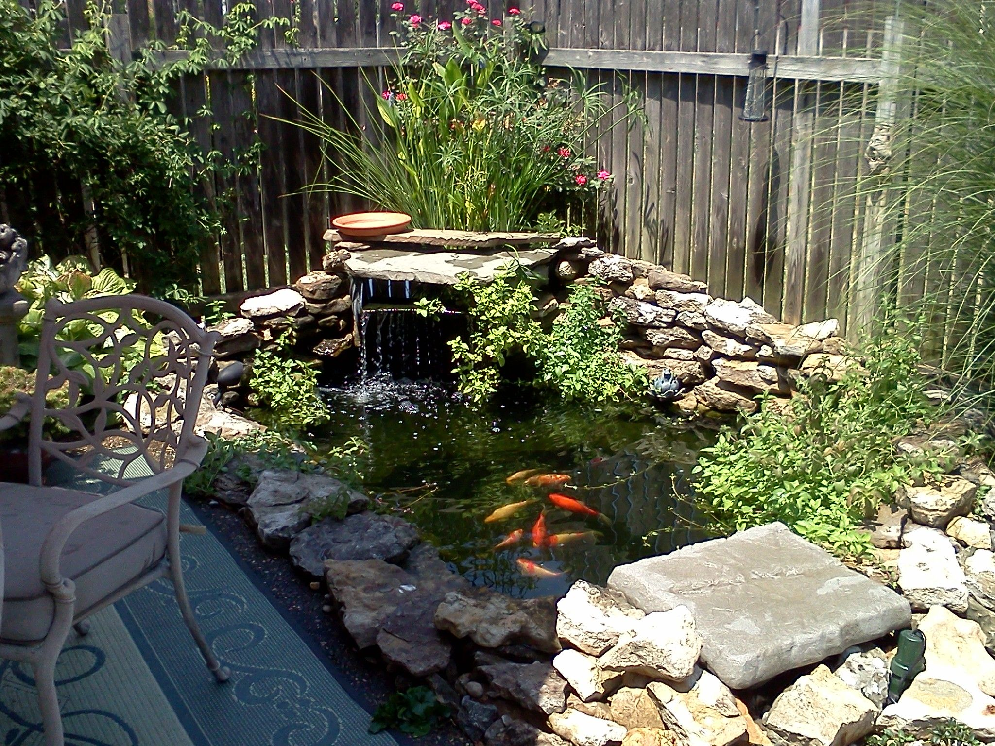 My backyard fish pond outdoor living garden for Backyard coy pond