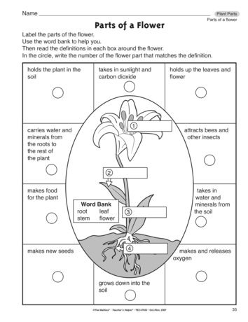 Parts Of A Flower Lesson Plans The Mailbox Parts Of A Plant