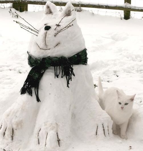 two snow cats
