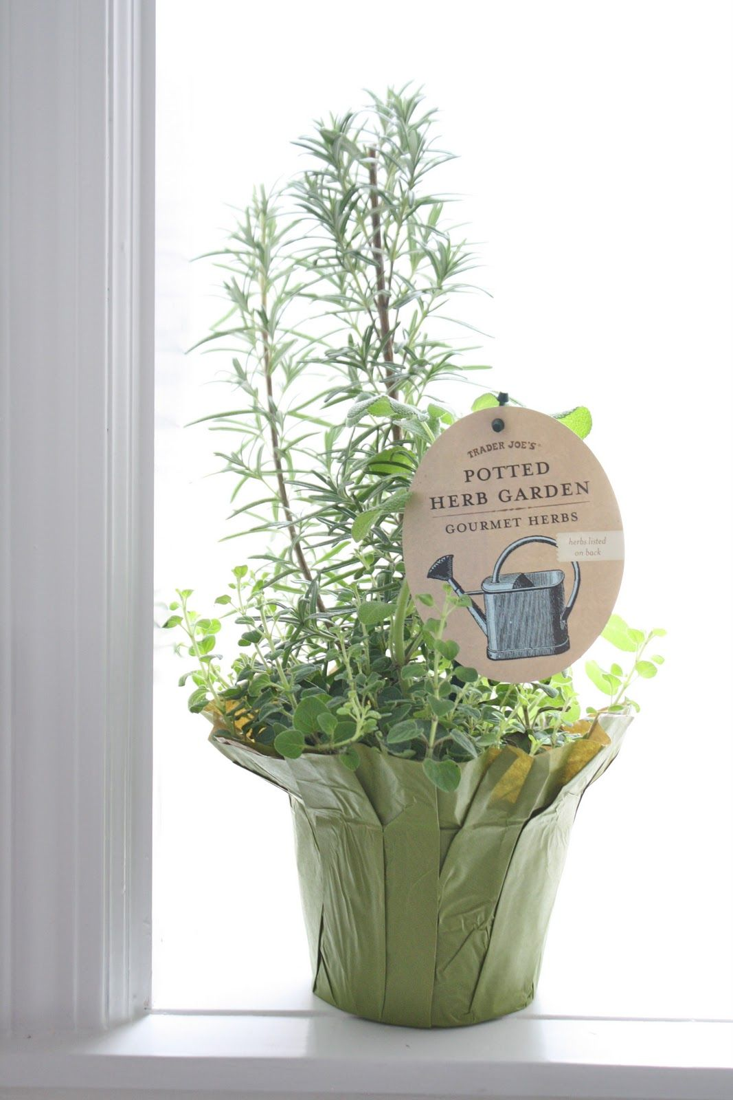 Trader Joe's Potted Herb Garden I need this! The one at