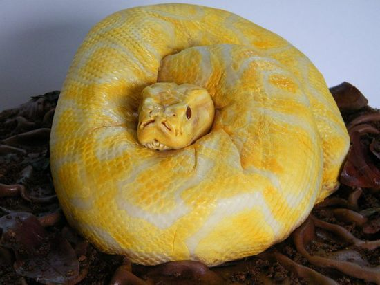 Python cake @Jackie Brieden-Andel happy you didn't have to make this cake?!? It's scary how real this thing looks!!!