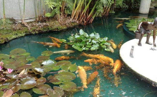 Jardines acuáticos JARDINES ACUATICOS NATURALES Pinterest