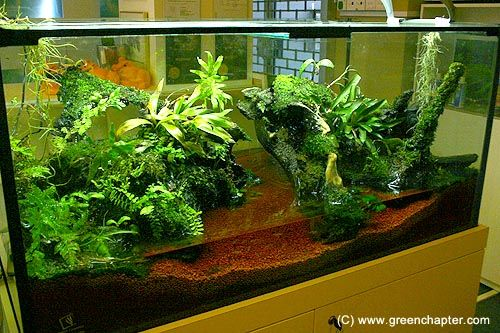 6ft vivarium with frogs hobbies i dont have time for. Black Bedroom Furniture Sets. Home Design Ideas