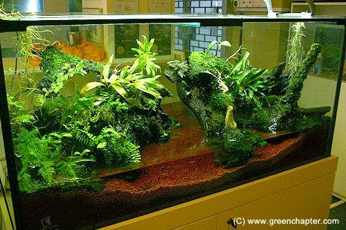 6ft vivarium with frogs hobbies i dont have time for pinterest fische. Black Bedroom Furniture Sets. Home Design Ideas