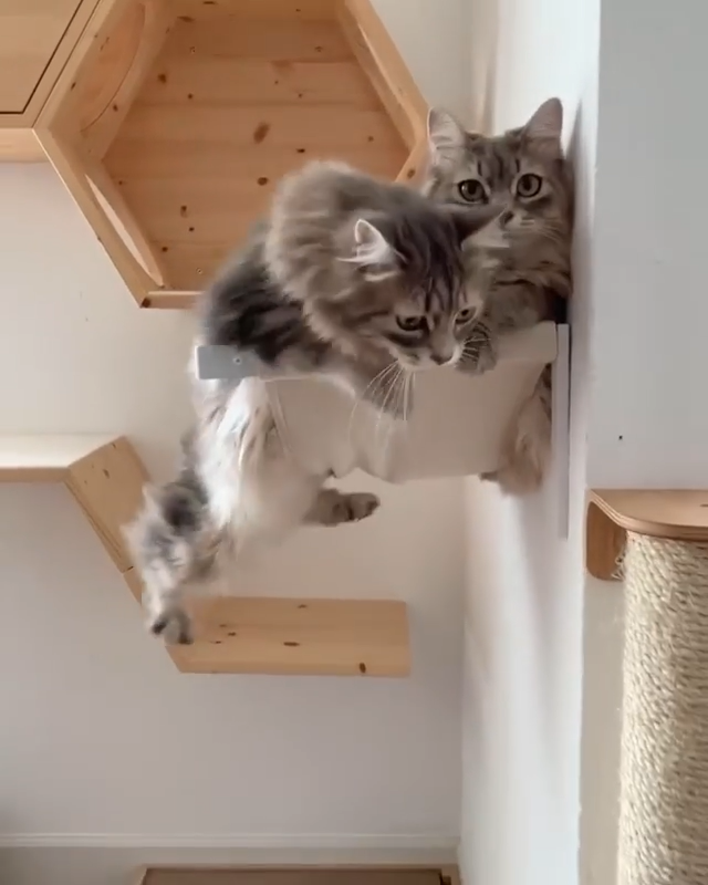 We Will Gonna Want A Much Bigger Cat Tree In 2020 Cute Cats