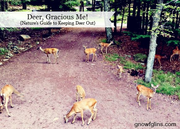 Lovely Natureu0027s Guide To Keeping Deer Out Of Your Garden This One Is For You Janie    Good Luck!