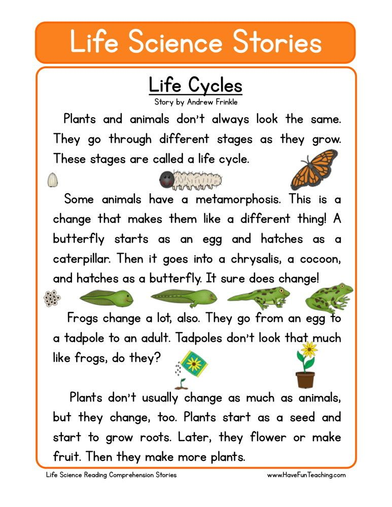 Reading Comprehension Worksheet Life Cycles Reading