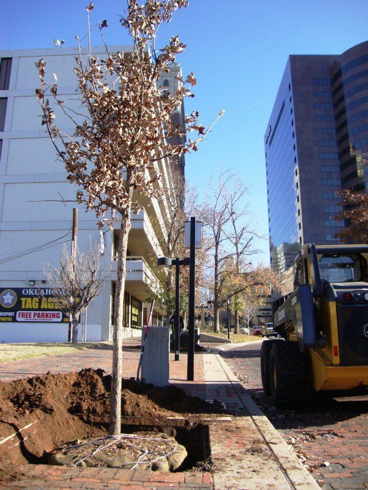 Plant trees correctly