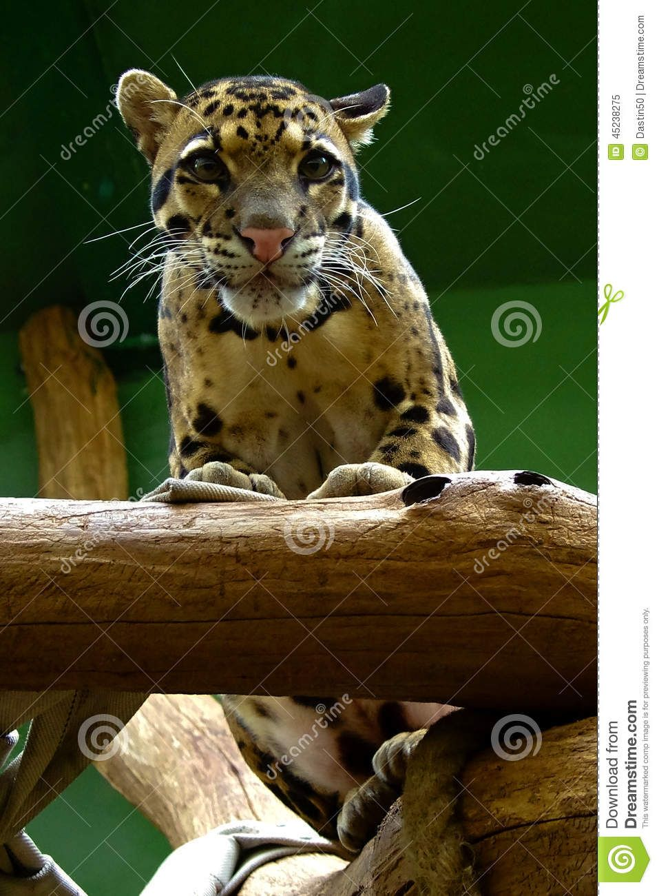 Dreamstime Comp Image Instructions Prague Zoo Animals Zoo